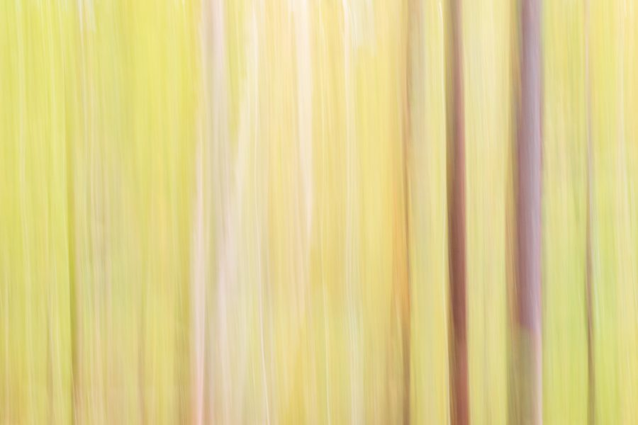 Abstract image of slow shutter movement