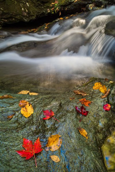 Colorful leaves with flowing stream
