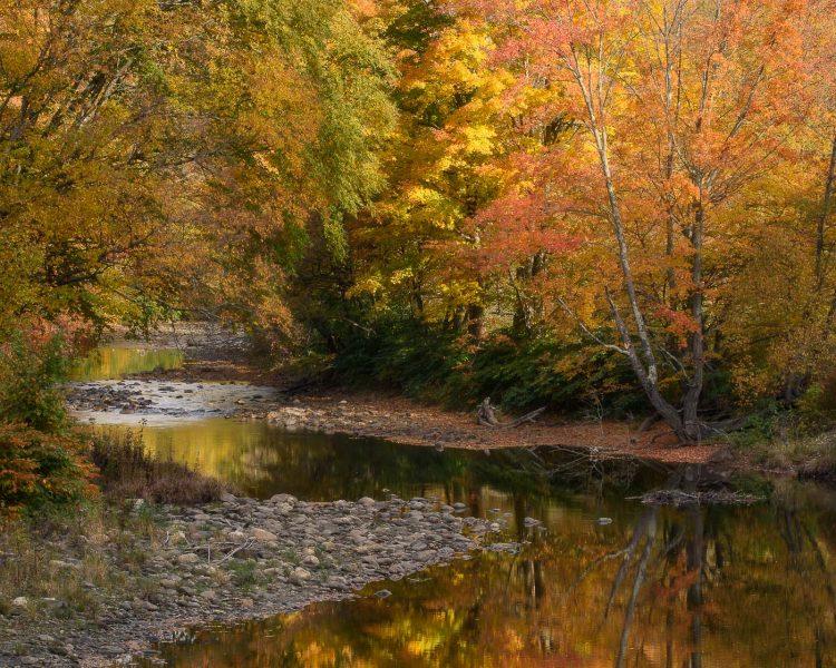 Foliage image using sidelight