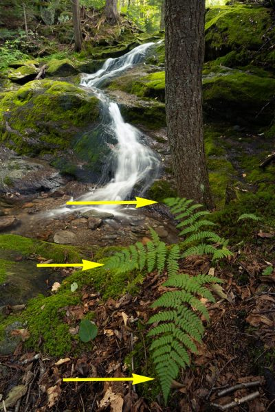 Example of wind blurring ferns in foreground